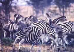 Self-Fly Safari Africa