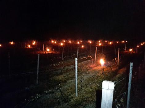 Des bougies antigel, pour les gels de printemps.