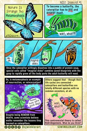 NIST_Insects! One.jpg
