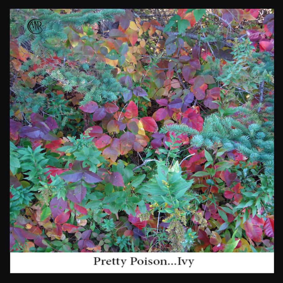 Pretty_Poison_...jpg