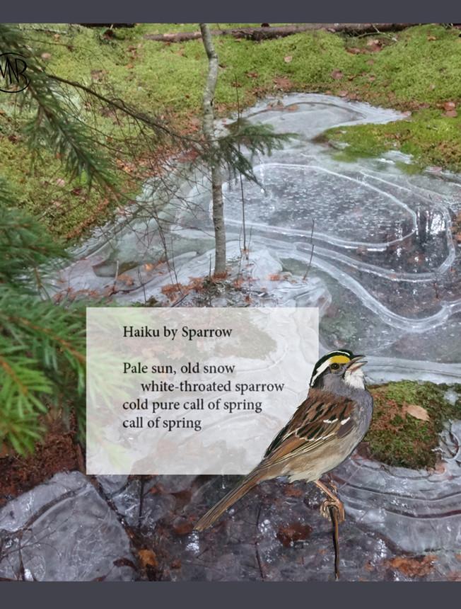 Sparrow_haiku_re igned.jpg