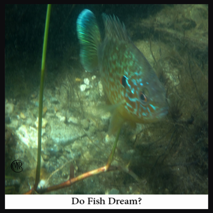 Do_Fish_Dream_reSigned_.jpg