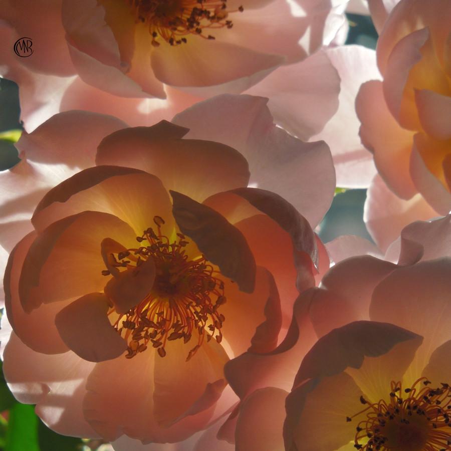 Rose_Window_reSigned_.jpg