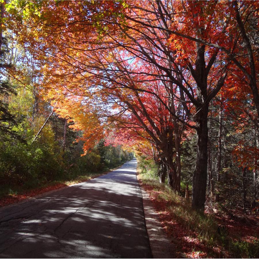 autumn resized.jpg