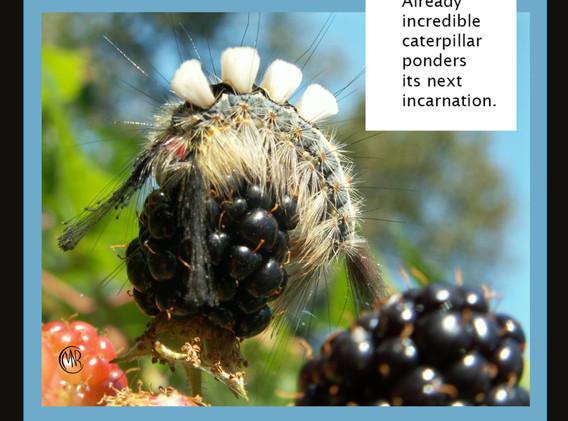 caterpillar ponders.jpg