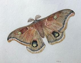 moth IMG-2465 resized.jpg