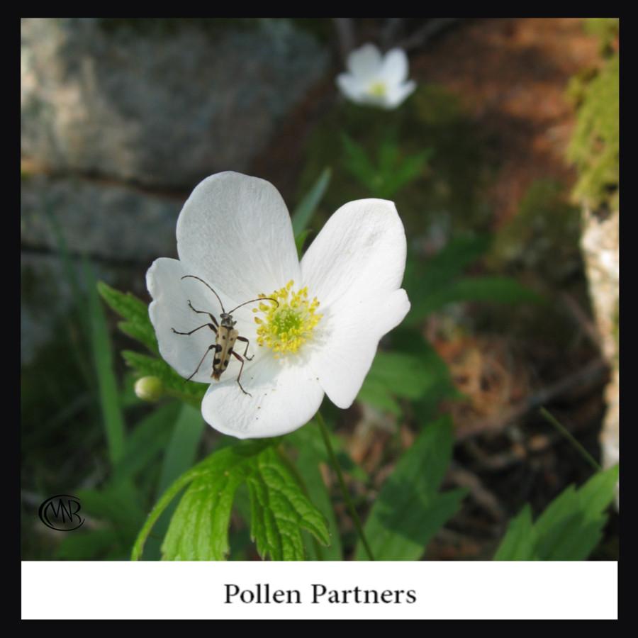 Pollen_Partnersresigned_.jpg