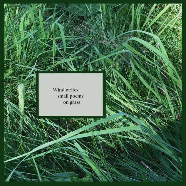Wind_Writes_Signed.jpg