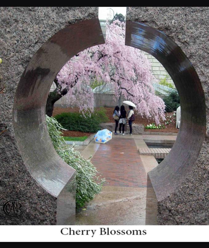 Cherry_Blossoms_reSigned.jpg