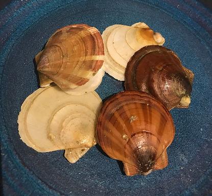 pretty shells IMG-2560resized_edited.jpg