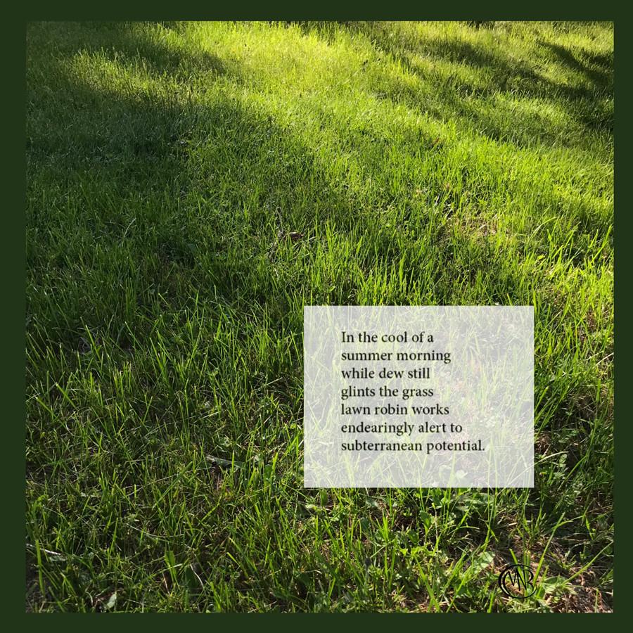 Lawn_robinresized.jpg