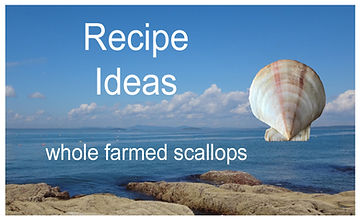 Recipe Ideas resized.jpg