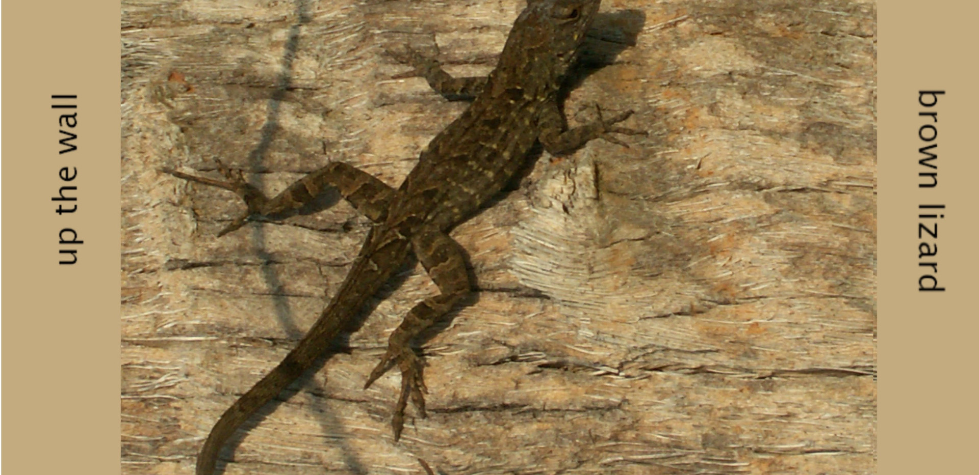 brown lizard.jpg