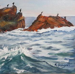 Cormorants View