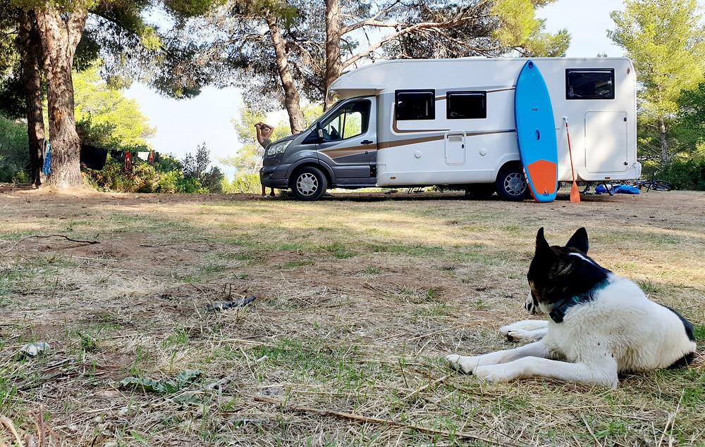 Pies w kamperze