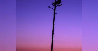 Bird of the Silhouette—_•_•_•_#naturepho