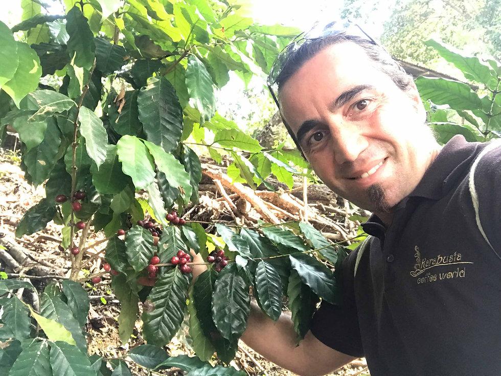 Kaffeekirschen Plantage Dominikanische.j