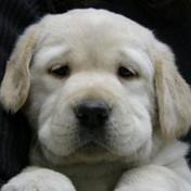 Infinity puppy
