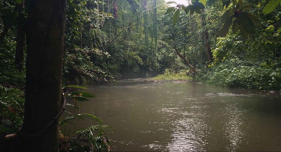 Ophir-jungle-Background.jpg