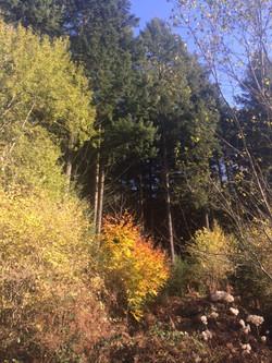 Forêt Hiver