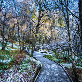 Queen Elisabeth Forest Park