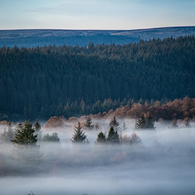 Misty early morning from the Lodge viewpoint, Queen Elisabeth Forest Park