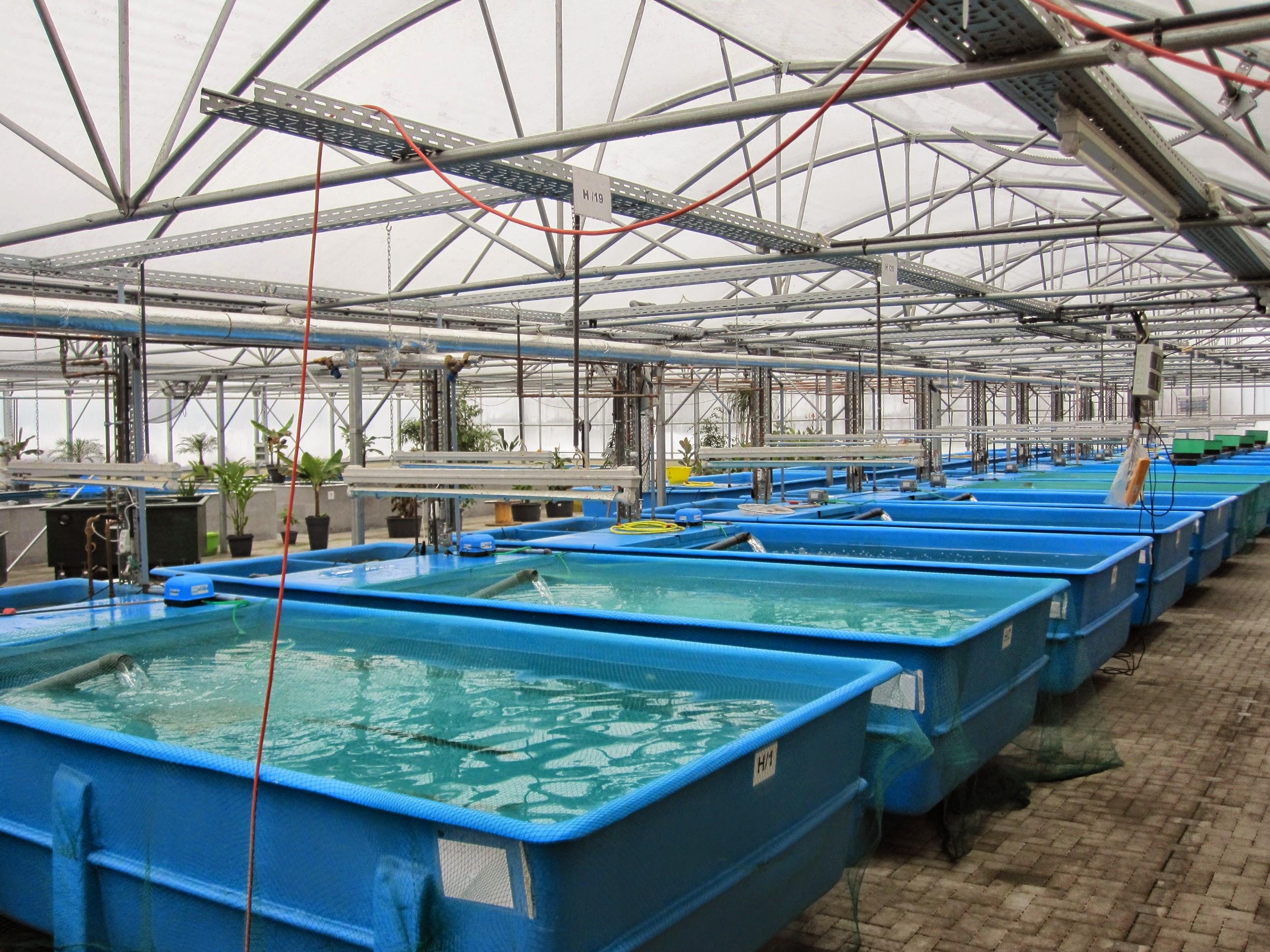 Energiemanagement Fischzucht