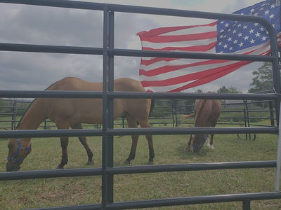 NEIGH HORSES WITH FLAG