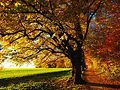 tree-779827_1920.jpg