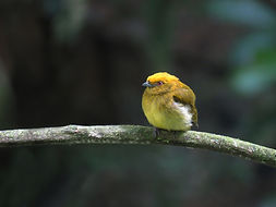 Birding Tours | Birding For Living