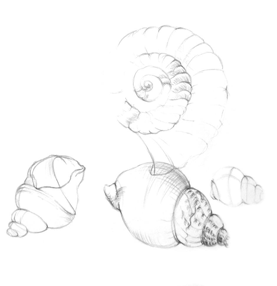 Zeichnung28.jpg