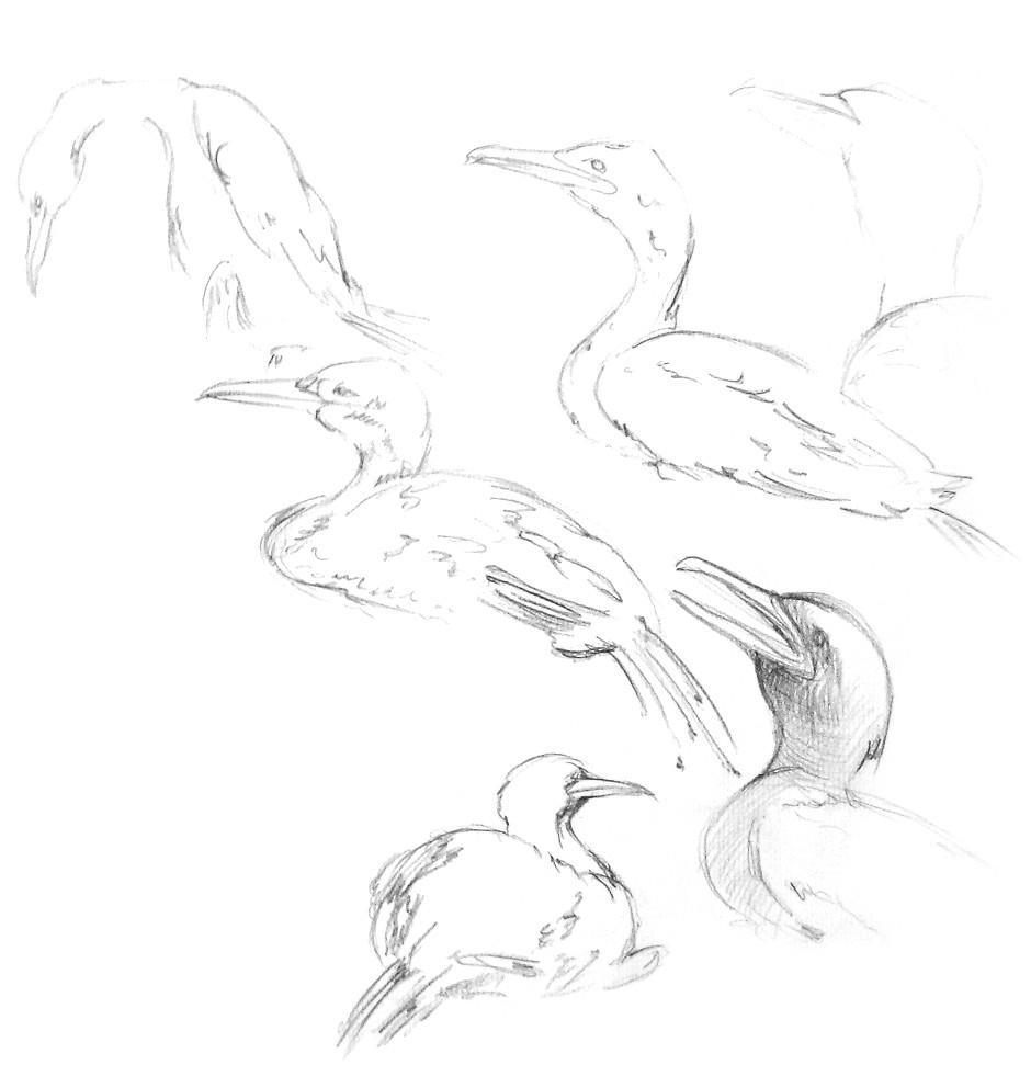 Zeichnung32.jpg