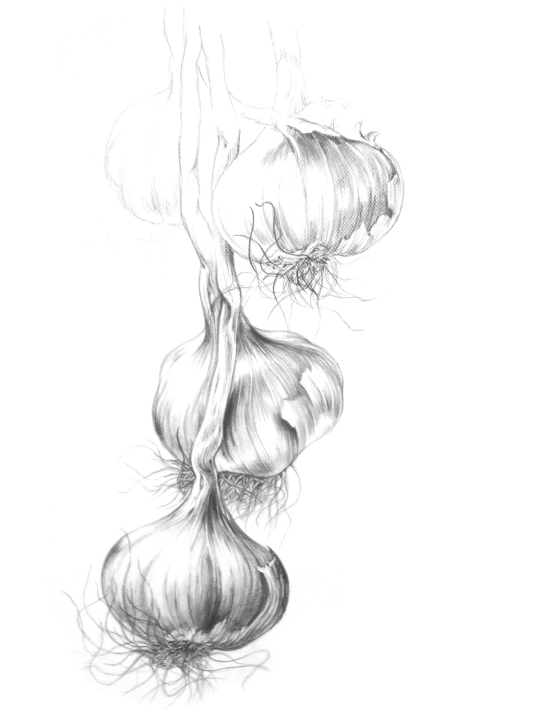 Zeichnung1.jpg
