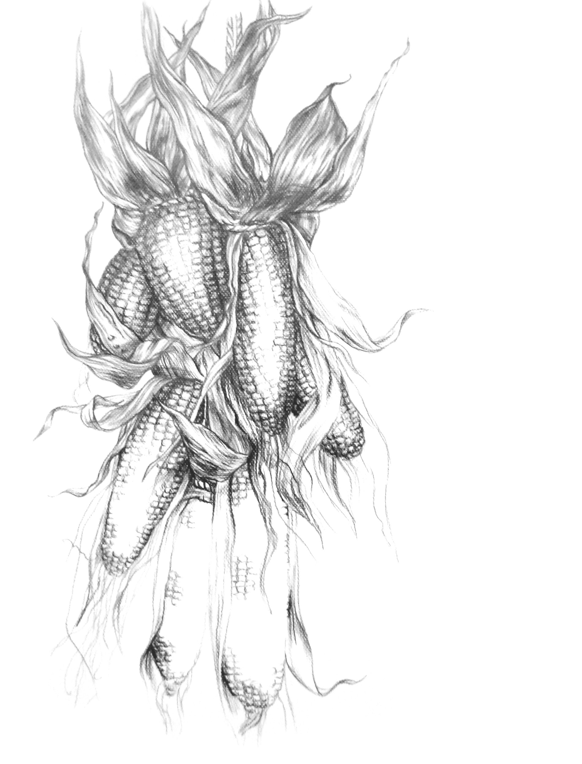 Zeichnung2.jpg
