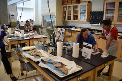 The Dissection Lounge