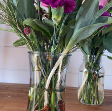 Tulips from the farm with bulbs you can plant
