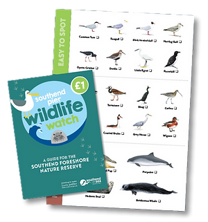 Southend Pier Wildlife Watch Leaflet