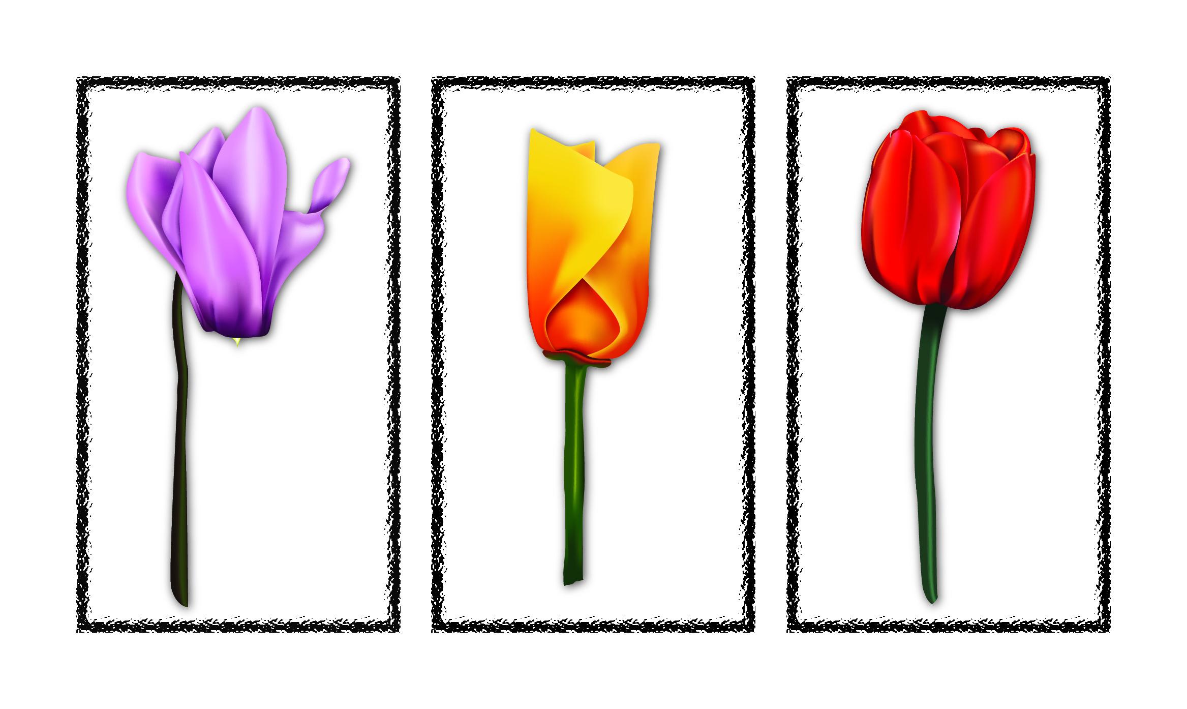Ad Illustrator drawn flowers