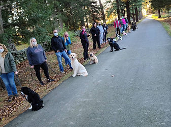 group class dog obedience training pack walk