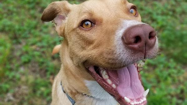 happy dog training consult