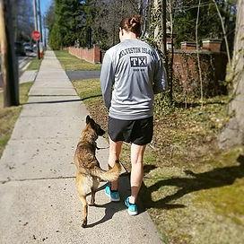 malinois german shepherd gsd training trainer dog dogs happy working k9 canine