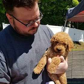 poodle puppy new dog training trainer help doodle goldendoodle labradoodle standard cute