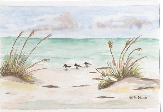 Beach Gulls