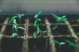 작은 녹색 식물