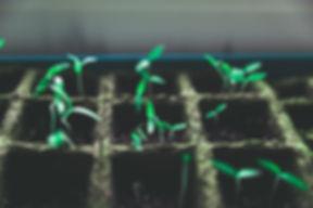 Piante Verdi piccoli