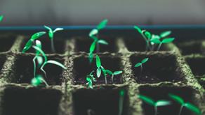 Faire pousser ses plantes plus vite et plus belles