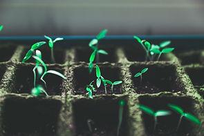 Plantes vertes minuscules