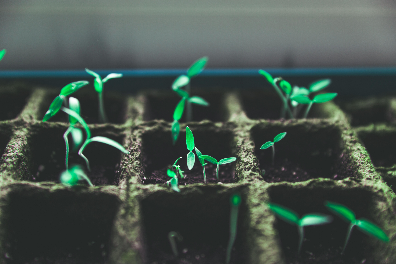 Gardening Workshops (3-Part Series)