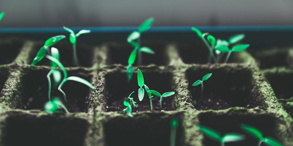 Seeds Kit - The Garden Center of Gypsum