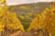 Tuscany-dreamstime_xl_21983810.jpg